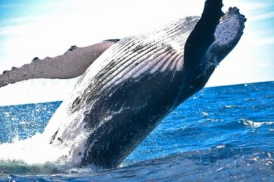 One Week Itinerary for Your First Ever Whale Watching Holiday on Maui
