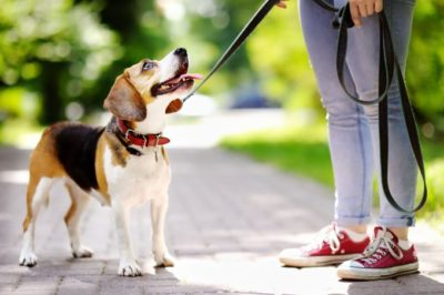 Dog-Friendly Attractions in Nashville